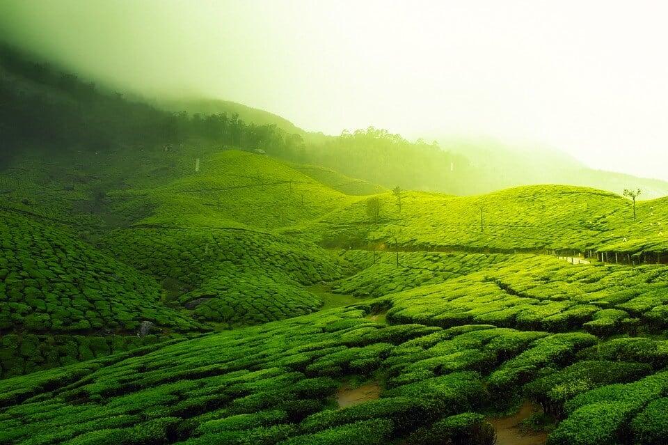 Travel is fatal to prejudice: view of tea plantation