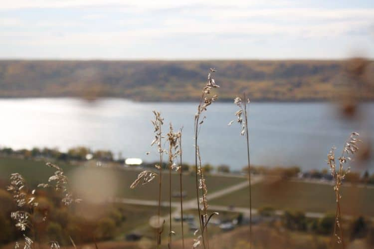Wheat stalks in the foreground with the Qu'Appelle Valley and lake in the background in Saskatchewan, Canada