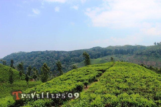 kebun teh sirah kencong blitar
