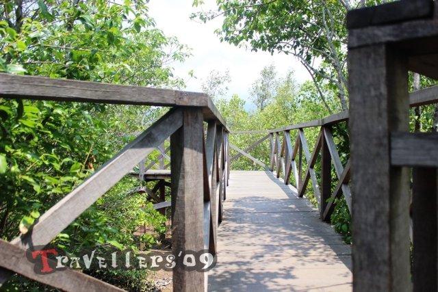 jembatan hutan mangrove trenggalek