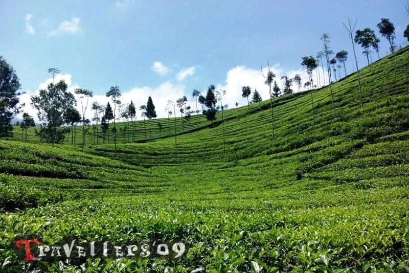 Wisata Agro Sirah Kencong Blitar 1