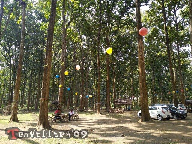 Jati Park Alas Pagak, Blitar 6