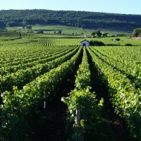 Vineyards, glazed tiles & ice cream in Beaune (FR)