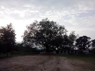 Jansooh -Village Travel Pathway Pics