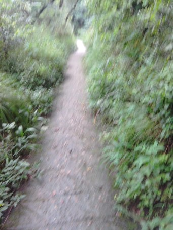 Jansooh -Village Travel Pathway Pics10