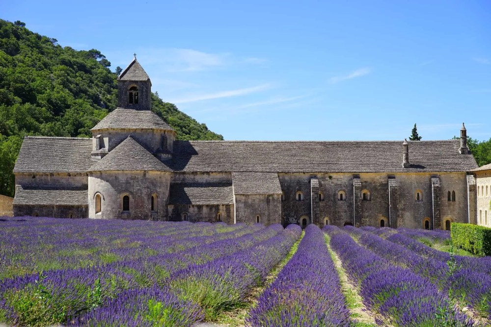 Valensole Plateau in Provence, lavender fields France, Valensole France, lavender fields france season, best time to visit lavender fields france, Notre-Dame de Sénanque Abbey