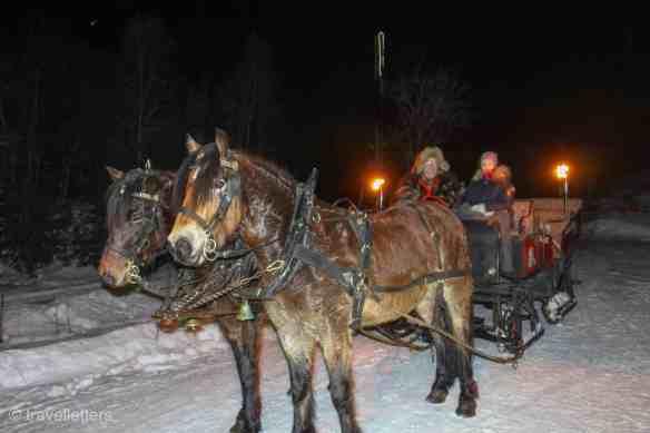 Sleigh ride horses, Norway in winter, Beitostølen ski resort Norway