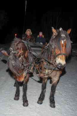 The beautiful horses that took us for a ride