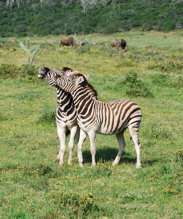 Kariega Game Reserve - 05