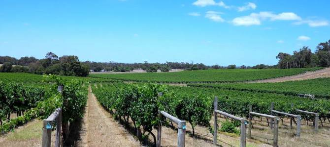Best winery lunches in Margaret River