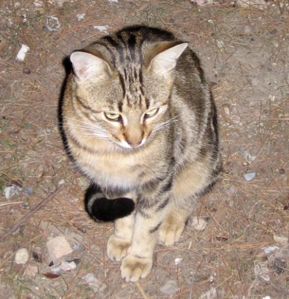 кот возле Херсонеса
