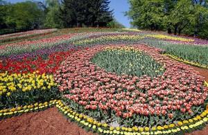 выставка тюльпанов в Киеве 2012