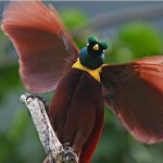 потешная птица