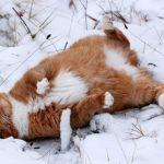 кот на отдыхе