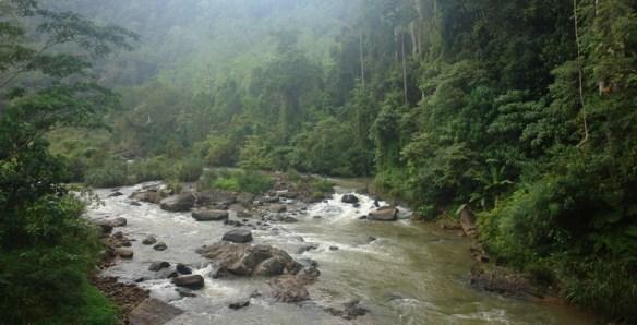 Sri Lanka дождевой лес тропики