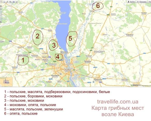 где собирать грибы возле Киева