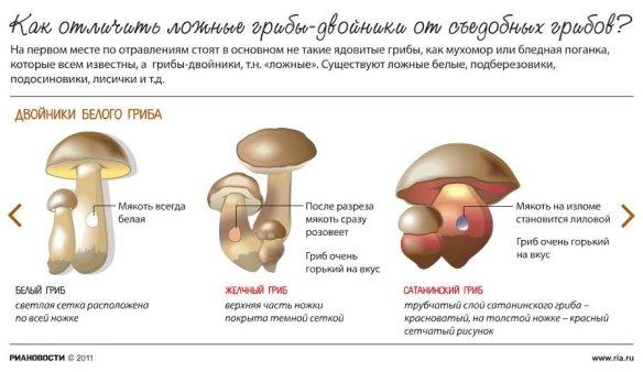 двойники белого гриба как отличить