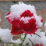 Аномальная весна 2017: жара и снег в апреле