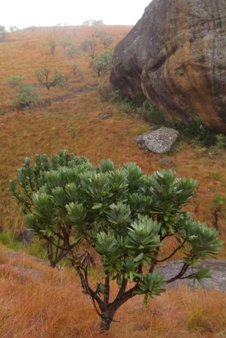 Blog-BushmanPaintings_04