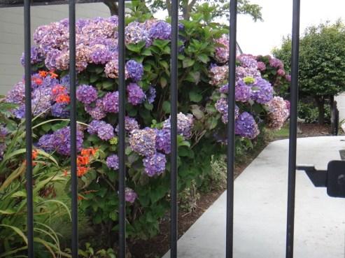Pretty Garden in Christchurch
