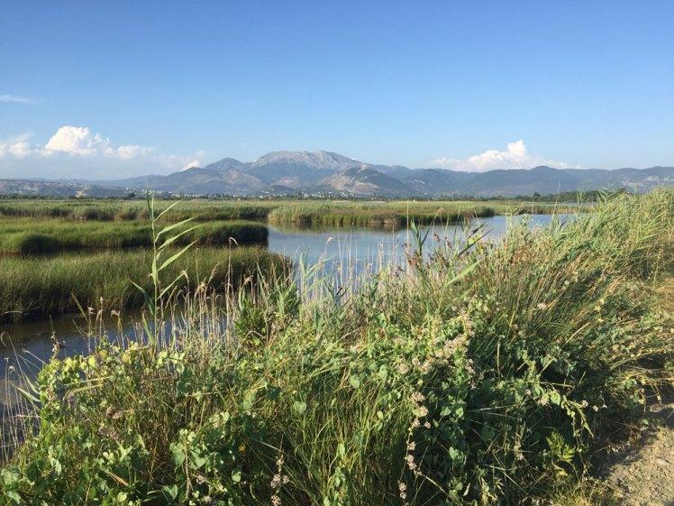 KUNE VAIN TALE lagune; veel groen en water.
