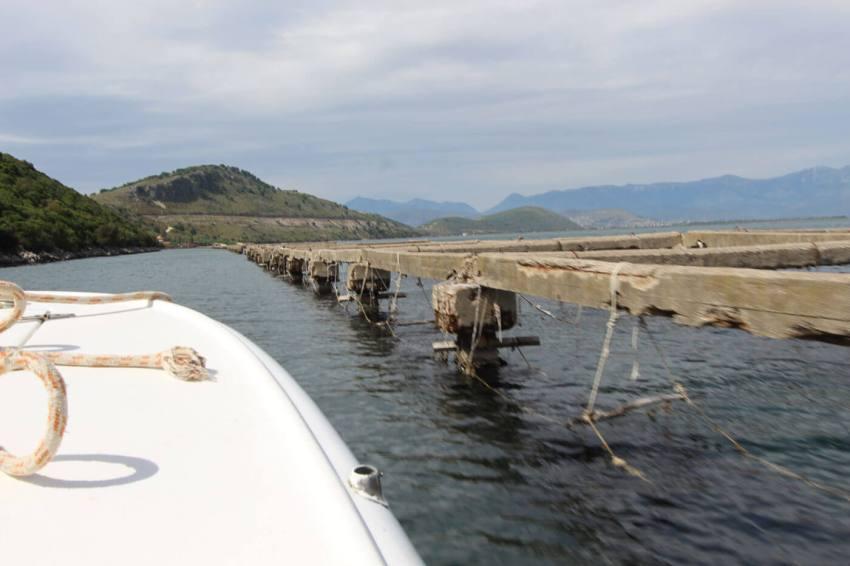 Stellages voor het kweken van mosselen in het meer van Butrint.