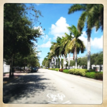 Palm Tree lined street
