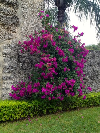 Beautiful colored flowers cover the outer walls