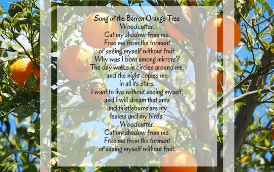 Verseday: The Song of the Barren Orange Tree by Federico Garcia Lorca