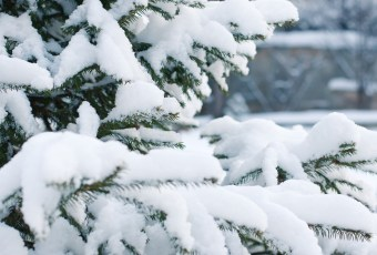 things to do in sofia this winter