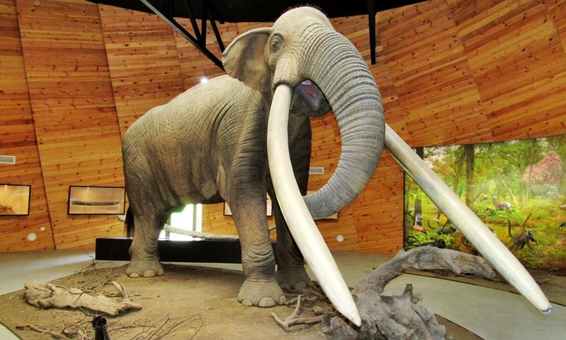 Dorkovo-pliocene-museum-velingrad