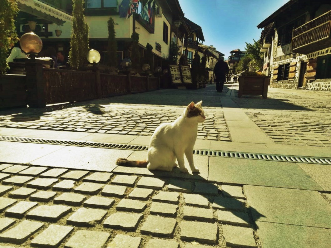 cats of bansko
