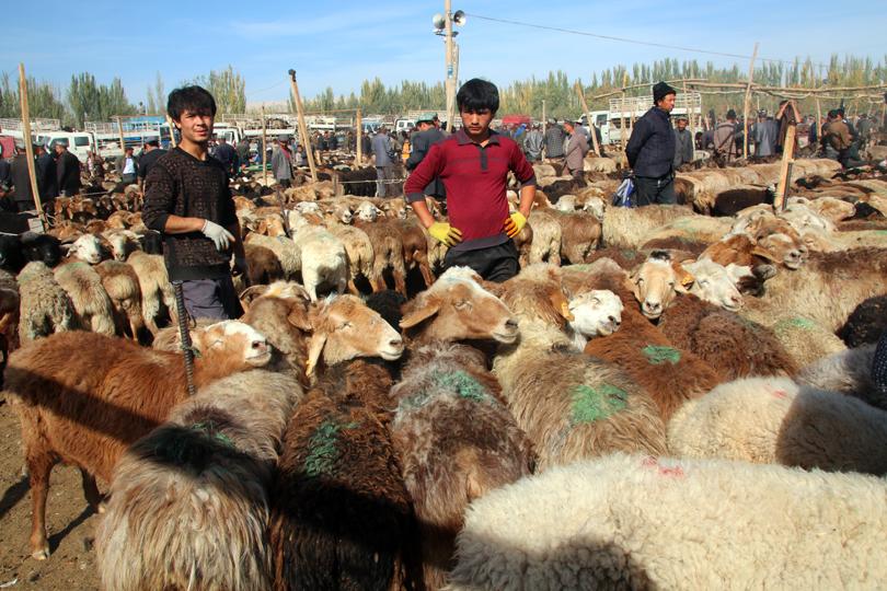 2015: Das Jahr des Schafes