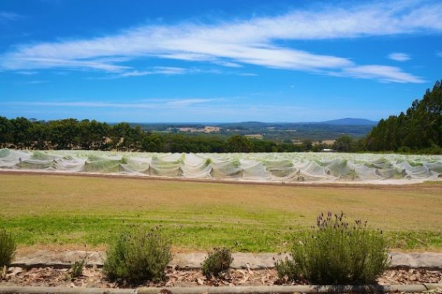 View from the Apricus Hill Wines Cellar Door