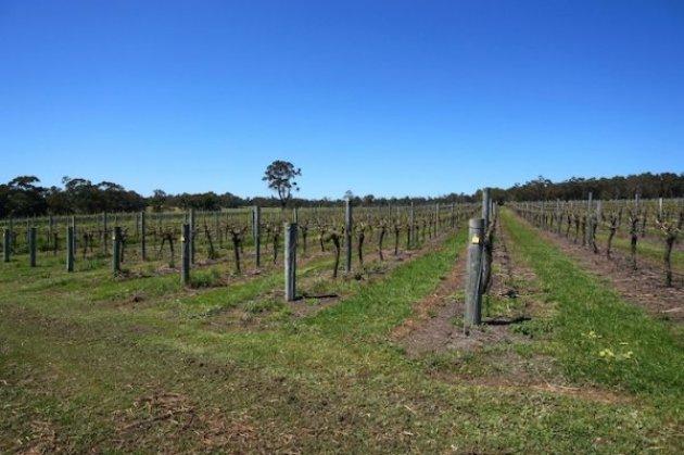Whicher Ridge Wines Vineyard, Geographe Wine Region