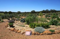 Wine Sensory Garden at Whicher Ridge Wines, Geographe Wine Region