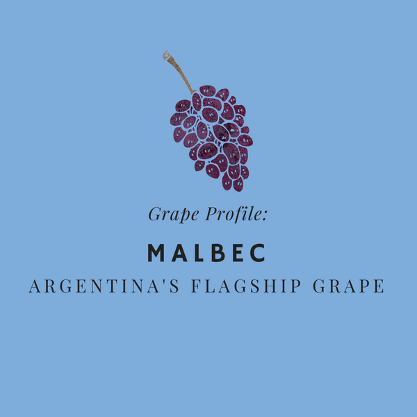 Grape Profile - Malbec - Argentina's Flagship Grape