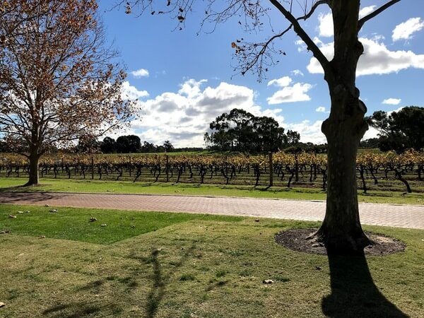 view-of-the-vineyard-at-sandalford-wines
