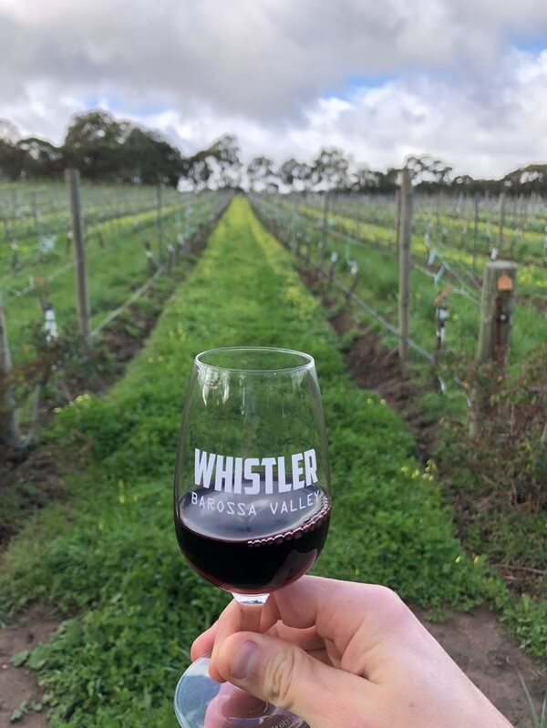 red-wine-in-the-vines-at-whistler-wines-in-the-barossa-valley
