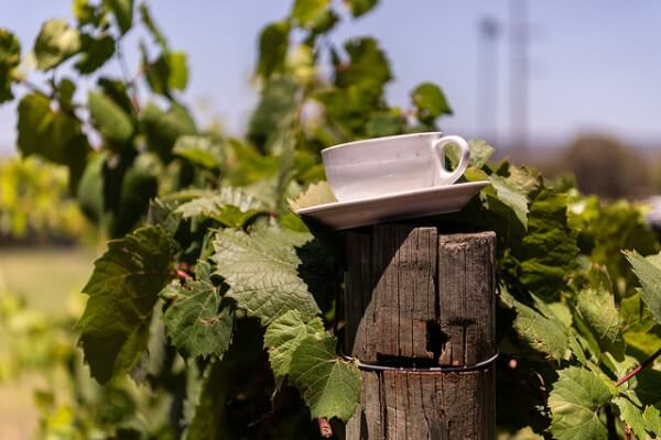 cup-and-saucer-on-pole-at-black-swan-winery-swan-valley