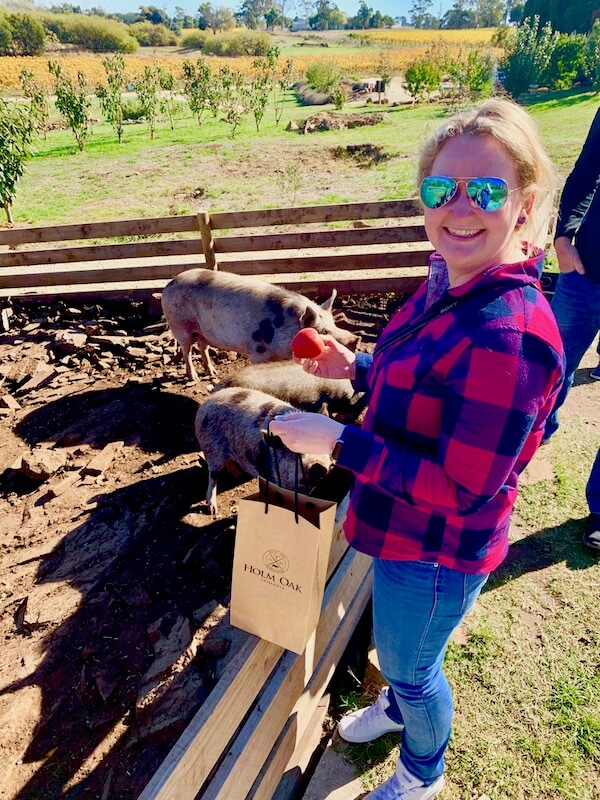 Casey feeding the pigs at Holm Oak in the Tamar Valley - Tasmania Winery