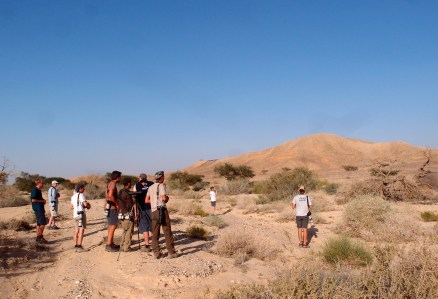 Her er vi på en større tur, ude for at finde rødehavssanger (Arabian warbler). Kun få fik fuglen at se, men det gjorde os nu ikke så meget, vi var nemlig på vej til ugler og natravne ved Det Døde Hav - og her var vi alle heldige!