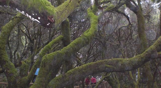 Garajonay, el parque del laurel