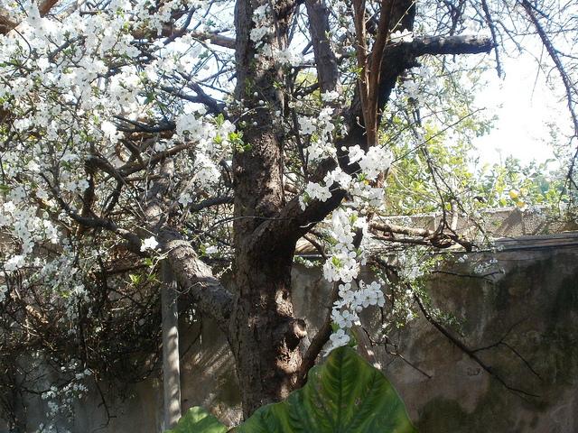 reto primavera 640