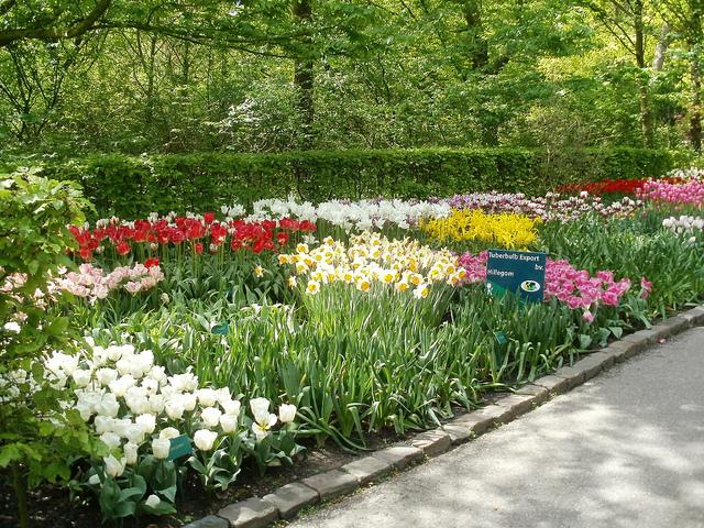 asi fue el tuliptrip 640