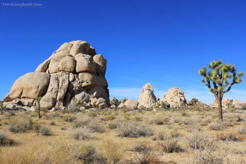 Joshua Tree Desert