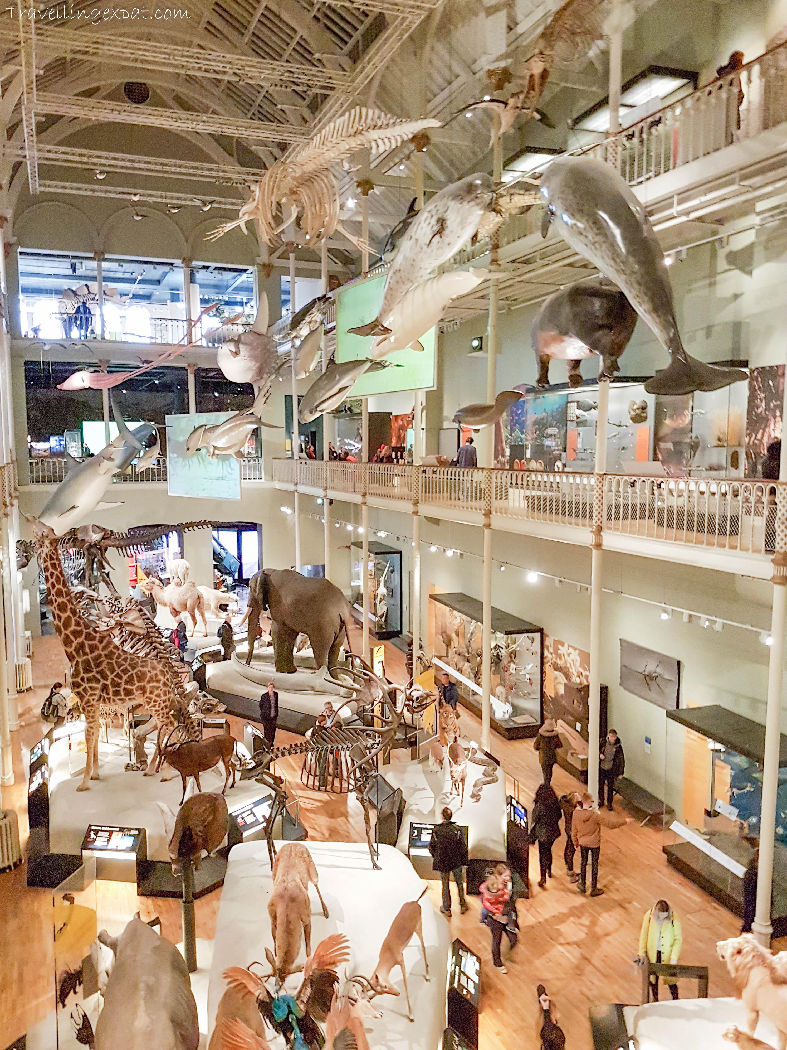 Edimburgo, National Museum of Scotland