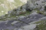 Stambecchi scendendo nel vallone di Nana