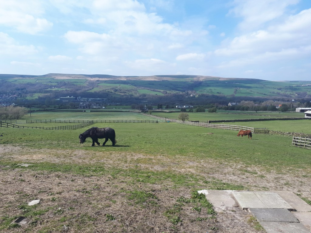 bleakholt-animal-sanctuary