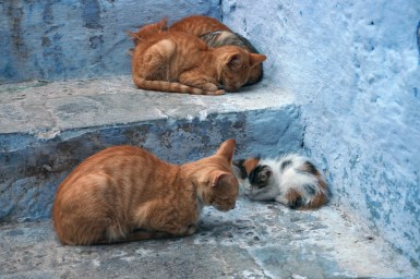 Cats of Morocco 4